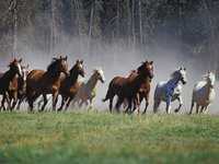 Horses and Horseback Riding